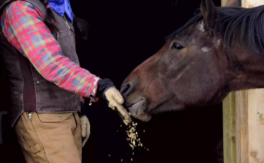 Articolo_Alimentazione-Cavallo_Horse-Care