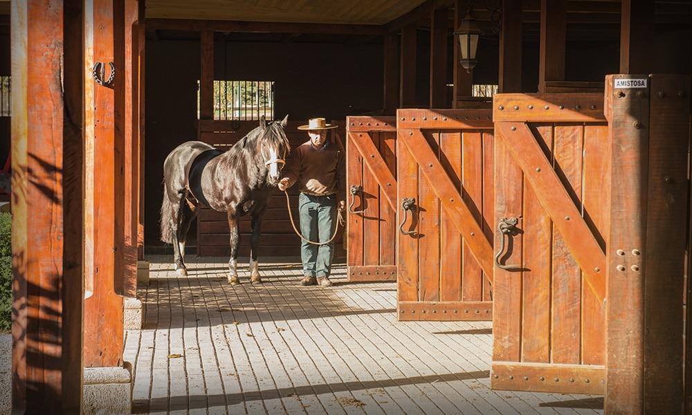 Il box cavallo perfetto