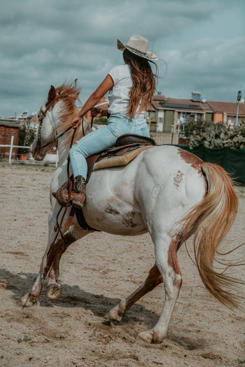 Monta western attività ranch