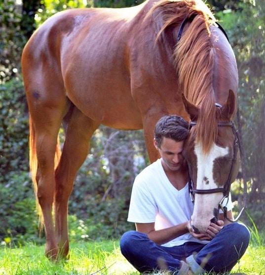 Cavallo e Cavaliere Equitazione