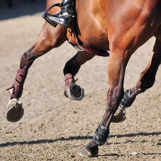 Articolo Cura dello Zoccolo del Cavallo Copertina Tosoni Selleria